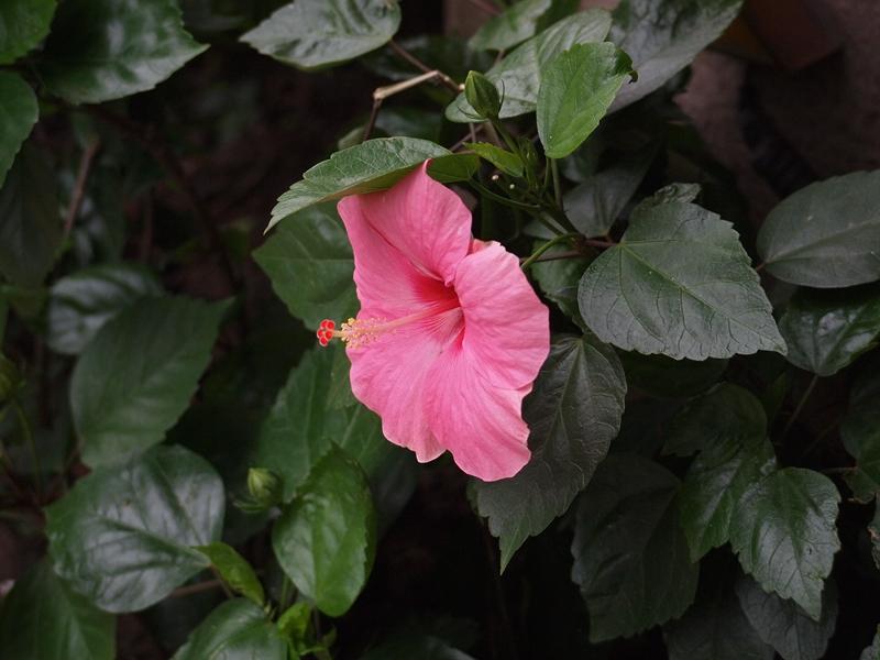 16大红花
