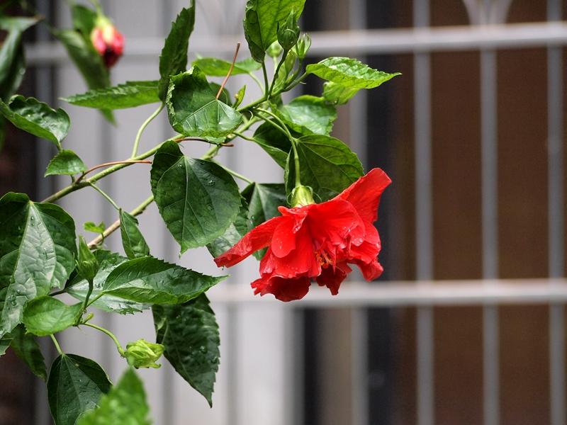 10大红花