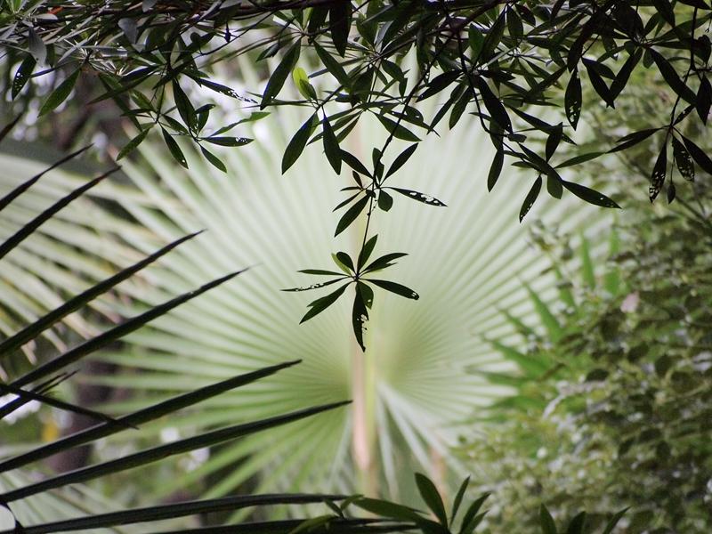 09水石榕