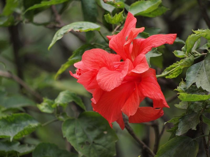 17大红花